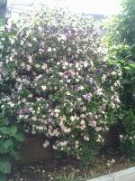 花のリレー3