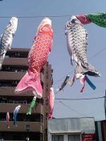 鯉のぼり昼2