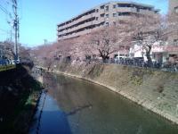 桜3月28日3