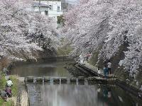 桜橋から0403a