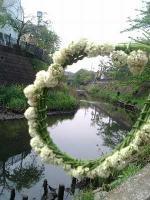シロツメクサ花環4