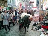 弘明寺の獅子舞です1