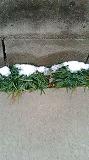 雪ちょっぴり01