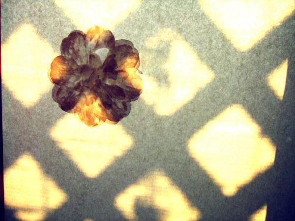 窓の花07
