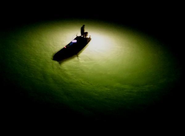 シラス漁10