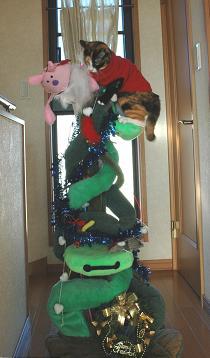 catmas_tree.jpg