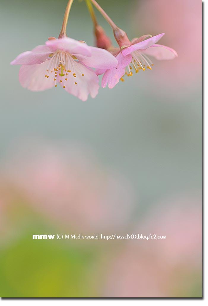 shinjyuku_16.jpg