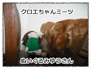羊の国のラブラドール絵日記Fabbrica2