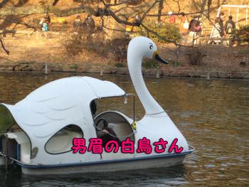 男眉ボート