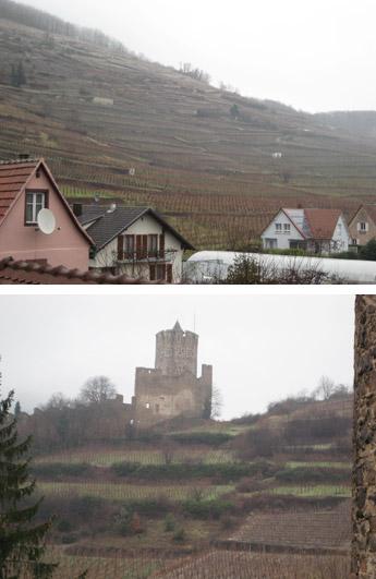 葡萄畑と城跡