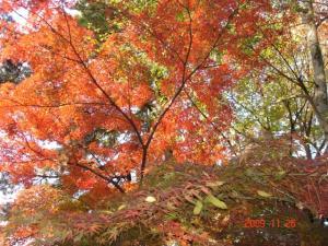 宝来公園の紅葉