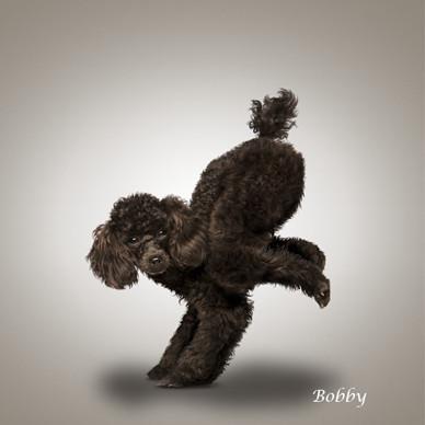 bobby_yoga_dog_20120308232508.jpg