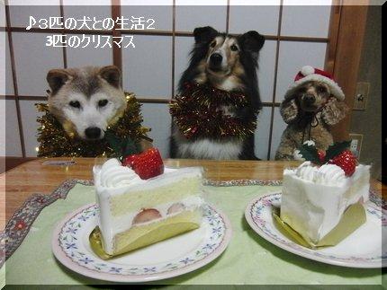 ケーキだ・・早く食べたい