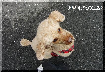 ばちばちあんちゃん
