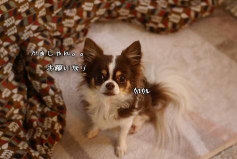 DSC040461121.jpg