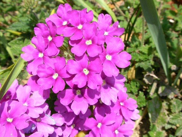 花壇の花①