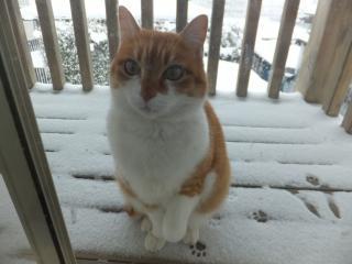 入れてくださ~い!