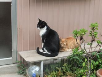2011-8-22 猫2