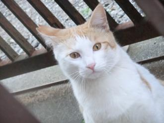 2011-3-29 猫2