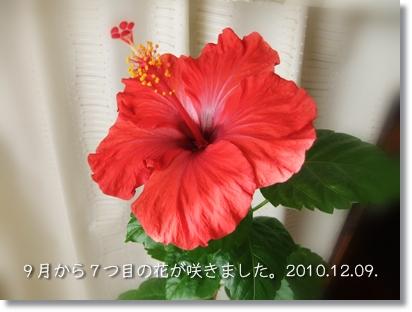 20101209-05.jpg