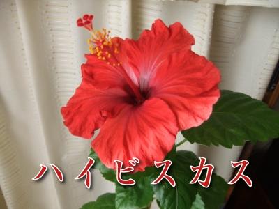 20110214-05.jpg