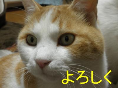 P1020210.jpg