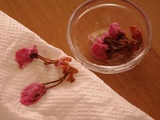 桜のせ抹茶プリン09