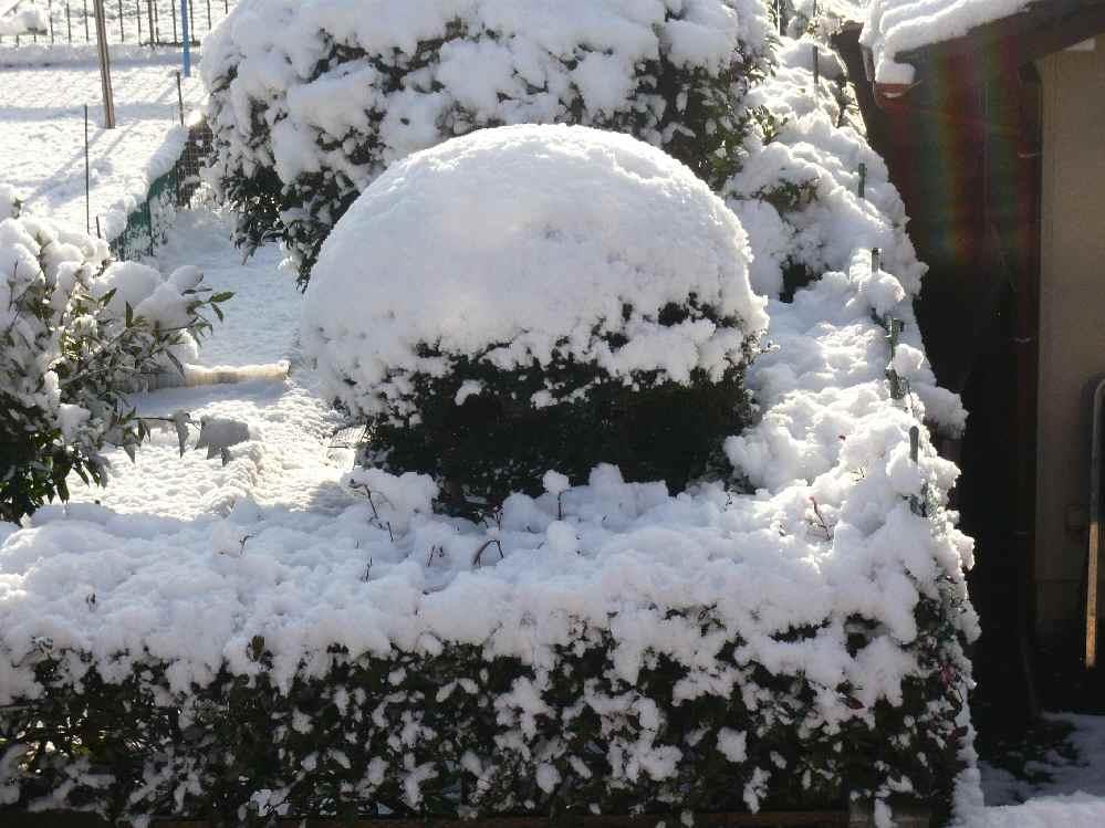 。。。☆雪が降ったぁ~☆。。。♪