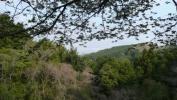 20120421原生の森03