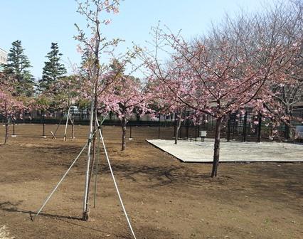 2013kawadu2.jpg