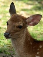 deer-fuku (オス)