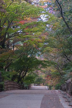 東山植物園1-1