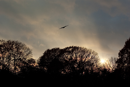 夕日と木々のシルエット