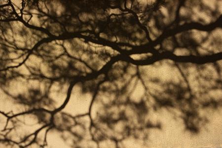 塀の木の影