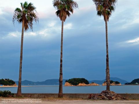 小豆島の椰子の木