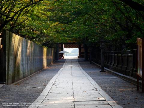 桜馬場の途中で振り返った景色