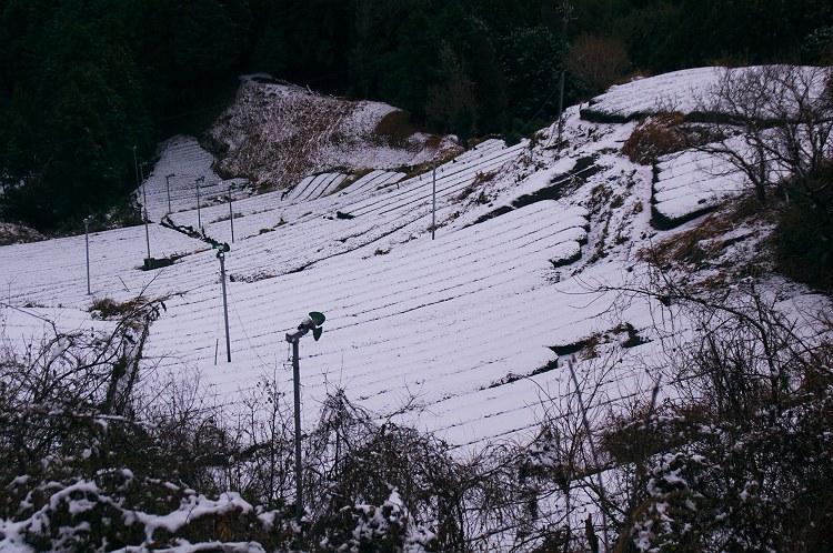 ~白い茶畑~ 粟ヶ岳雪景色 3