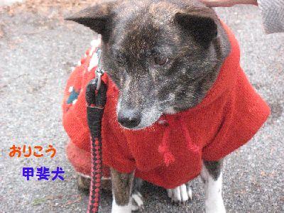 IMG_2547甲斐犬