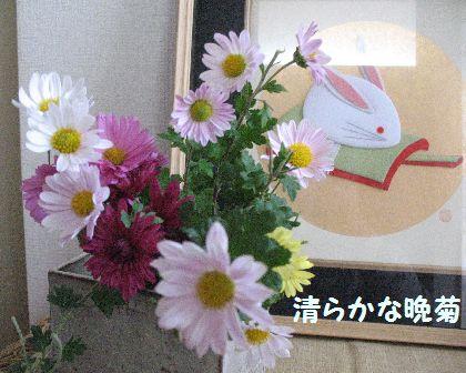 IMG_0623晩菊