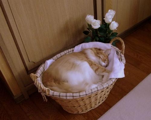 カゴの中で熟睡中
