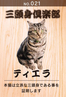 3to-sin20110121.jpg