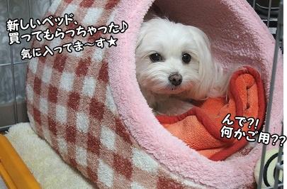 寒さ対策に、新しベッドを★