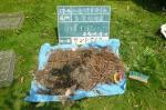 砂場のごみ 木の根