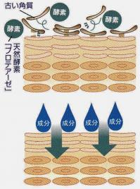 化粧水で角質ケア ターンオーバー促進して もちもち艶肌!
