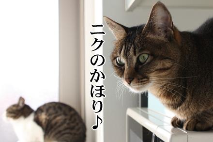 猫、厨房に居る