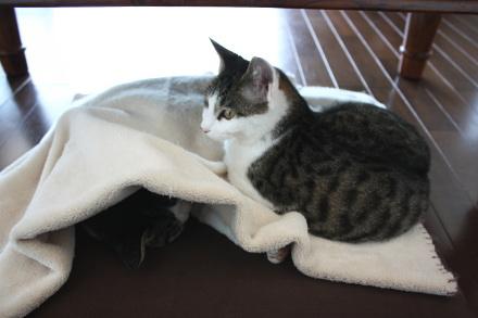 まず、猫1を座布団に載せ、毛布をかける