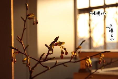 草木燃え動く季節・・・河津桜