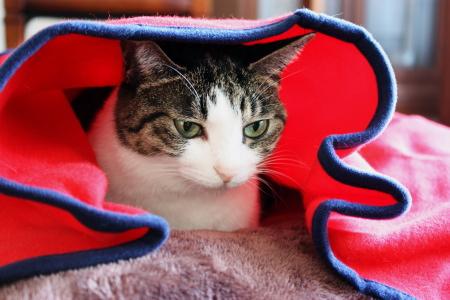 薄いよ、この毛布・・・