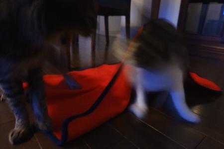「少しは大人になりな!どら猫!」「アタシの陣地だもん!めす猫!」