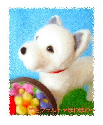 北海道犬くん1